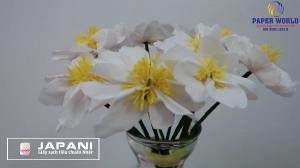 Cắm hoa cúc họa mi và bình hoa cúc họa mi bằng giấy vệ sinh