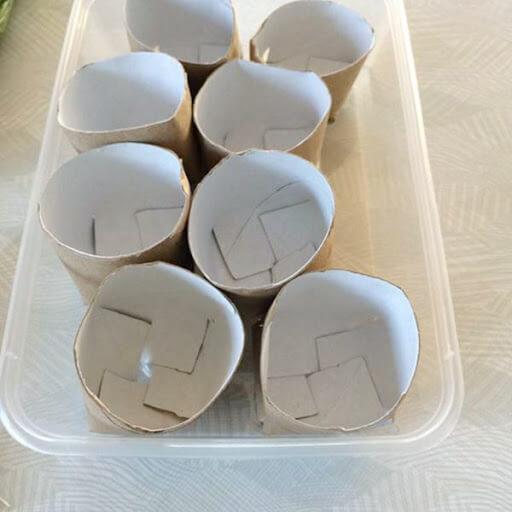 Mẹo trồng hành lá bằng lỗi giấy vệ sinh