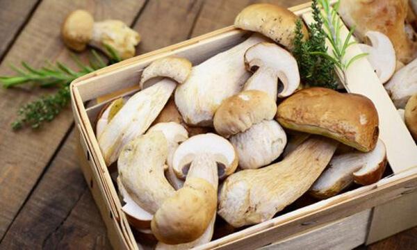 Giá trị dinh dưỡng của nấm